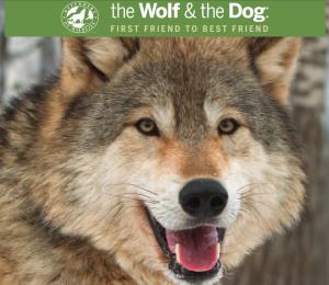wolf & dog