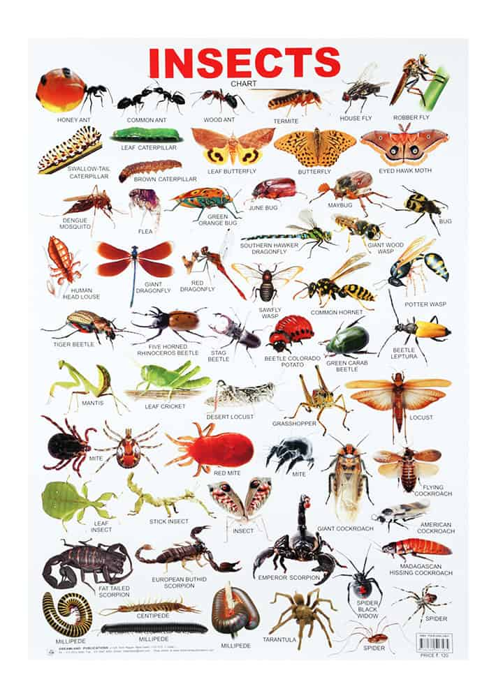 Insects Online Magazine And Teacher S Guide The Teachers