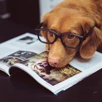 dog-book-400x400 (1)