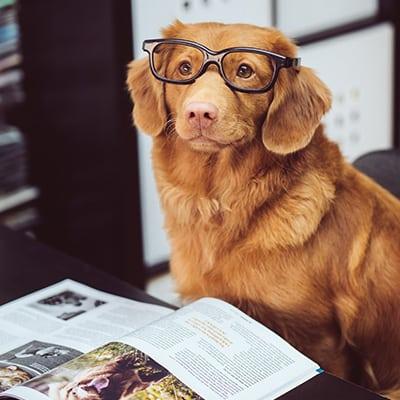dog-book-400x400 (2)