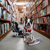 dog-library-400x400