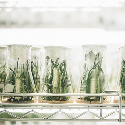 lab-plants-400x400